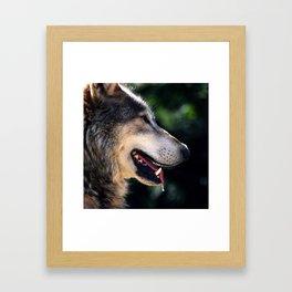 Hunting Wolf Framed Art Print