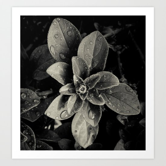 Rainy Leaves  Art Print