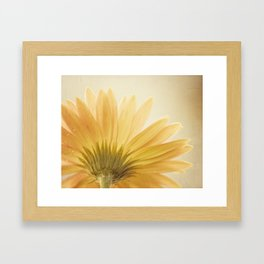 Gold Yellow Flower Photography, Golden Daisy Floral Photo, Nature Botanical Macro Picture Framed Art Print