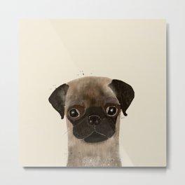 little pug Metal Print