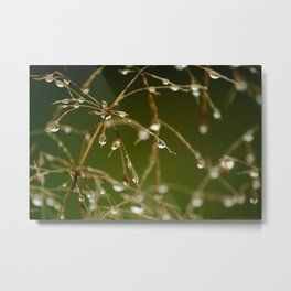 Branches of Dew Metal Print