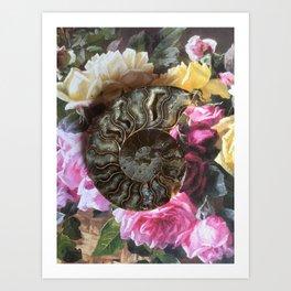 The Ancient Ammonite Art Print