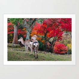 Deer in Fall Fine Art Print  • Travel Photography • Wall Art Art Print
