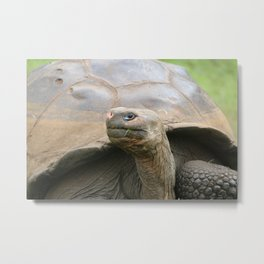Giant tortoise Galapagos Metal Print