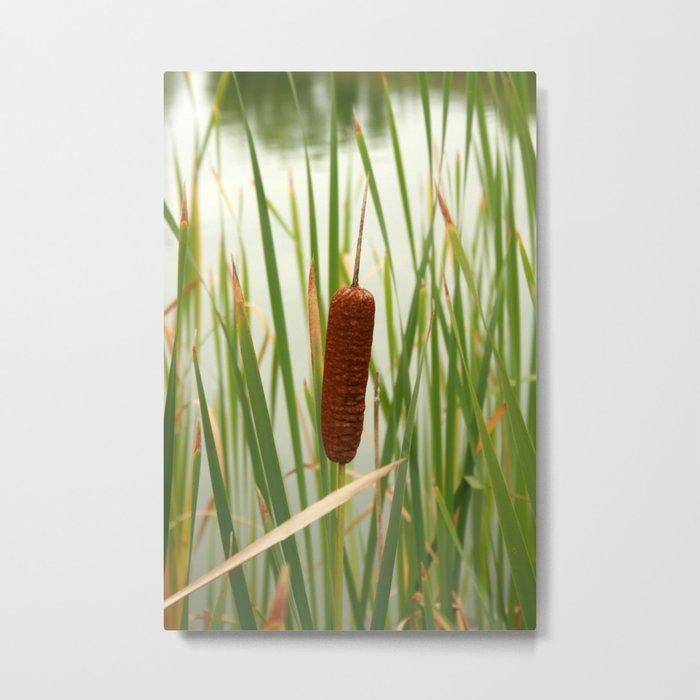 Cattail in a Marsh Metal Print