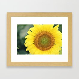 sunflower beauty no. 3 Framed Art Print