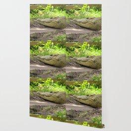 crocodile grin Wallpaper