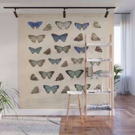 Vintage Hand Drawn Scientific Illustration Insects Butterfly Anatomy Colorful Wings Wall Mural