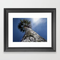 Reaching To The Sun Framed Art Print