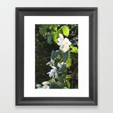 Spring Glow Framed Art Print