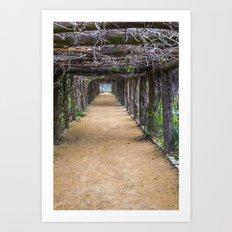 Coker Arboretum Tunnel Art Print