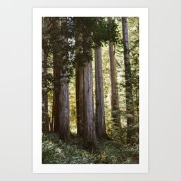Peaceful Forest Art Print