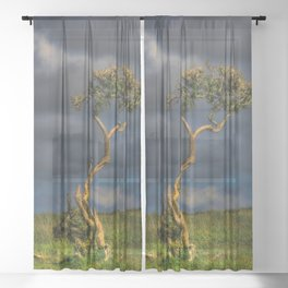 Survive I Will - Lone Gorse on Windswept Moors Sheer Curtain