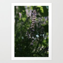 Veiled in Softness and Sunlight Art Print