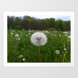 Flor:. Art Print