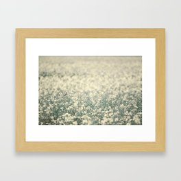 Alone in the canola field Framed Art Print