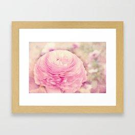 AFE Pink Ranunculus Framed Art Print