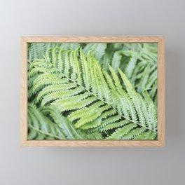 Fern 3 Framed Mini Art Print