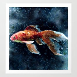 Schleierfisch Art Print