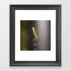 Twig Framed Art Print