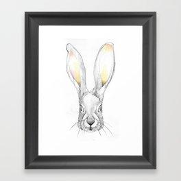Jack Rabbit Framed Art Print