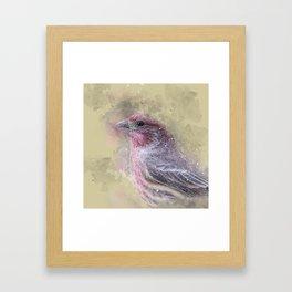 Rosey House Finch Framed Art Print