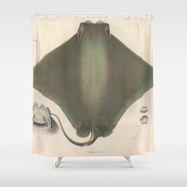 Vintage Stingray Illustration (1863) Shower Curtain