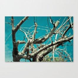 Sky Antlers Canvas Print