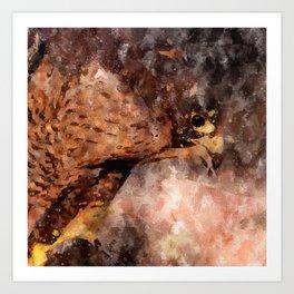 Peregrine falcon (Falco peregrinus) Art Print