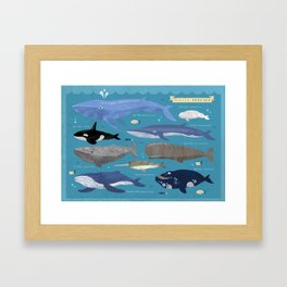Whale Species Framed Art Print