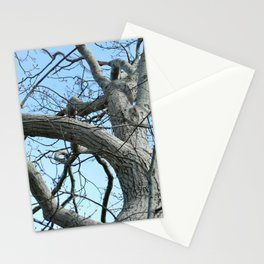Winter Tree in Beverly, MA Stationery Cards