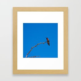 Beautiful Hummer - II Framed Art Print