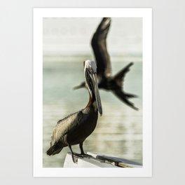 Pelican Photobombed by a Frigatebird Art Print