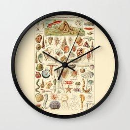 Seashell Diagram // Mollusques by Adolphe Millot 19th Century Science Textbook Artwork Wall Clock