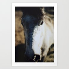 Horse Wall Art Abstract Color Film Photograph Gray and Brown Equine Art Print