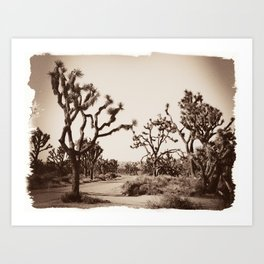 Joshua Tree Road Art Print