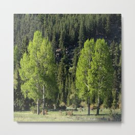 Meadow With Aspen Metal Print