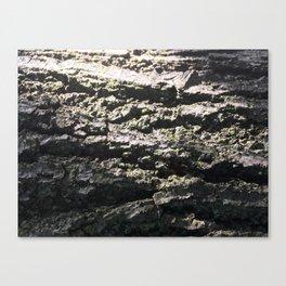 Shedding Light Canvas Print
