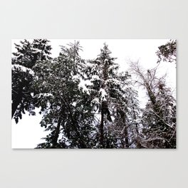 WINTER IS FALLING Canvas Print