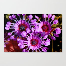 Purple Whirligig - Phoenix Canvas Print