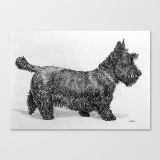 Scottish Terrier by awindingpathartofruth