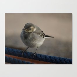 Wagtail on a rope Canvas Print
