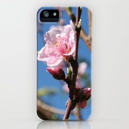 Delicate Buds of Peach Tree Blossom iPhone Case