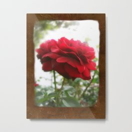 Red Rose with Light 1 Blank P3F0 Metal Print