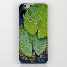 Water Lilies iPhone & iPod Skin