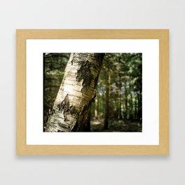 Falling Forest Framed Art Print