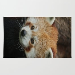 Watchful Red Panda Rug