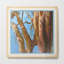 MADRONA TREE BY THE SEA Metal Print