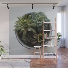 Succulents in Classic Chrome 02 Wall Mural