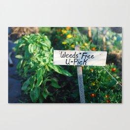 Weeds Free U-Pick Canvas Print